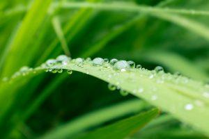 groen blad met druppel